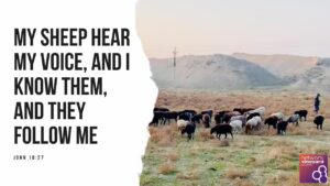 "Sunday 28th June 2020 John 10:27  ""My sheep hear my voice, and I know them, and they follow me"""